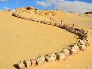 Spektakuläre Urwal-Funde in der ägyptischen Wüste nahe der lybischen Grenze. (Bild: Susanna Petrin)