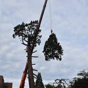 Der Künstler Stephan Schmidlin (links) im Gespräch mit Heinrich Roth, Spezialist für Baumpflege.