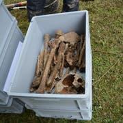 In den oberen Erdschichten lagen viele Knochen ungeordnet in der Erde.