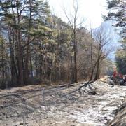 Die Höwisen-Gewässerläufe wurden für die Revitalisierungsarbeiten trocken gelegt. Aus der ehemaligen Fischzuchtanlage wird in Kürze ein neues Naturparadies entstehen. (Bild: PD)