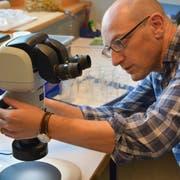 Johannes Kottonau, Lehrer für Biologie und Chemie an der Kanti Frauenfeld, nimmt die Stereolupe aus Max Schneiders Nachlass unter die Lupe. (Bild: Mathias Frei)