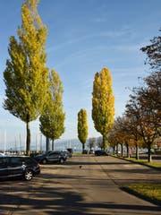 Der Hafendamm: Früher ein Kiesumschlagplatz, heute ein Parkplatz, künftig vielleicht eine Flaniermeile. (Bild: David Grob)