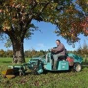 Ueli Glauser sammelt die Birnen unter den grossen Bäumen mit der Maschine ein. (Bild: Mario Testa)