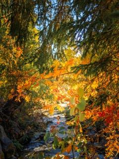 Die Farben des Herbstes sind immer wieder herzerwärmend. (Bild: Jerome Bally (13. Oktober 2018))