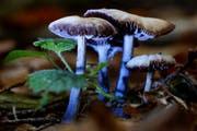 Leserbild. Ingrid Zürcher fotografierte die Pilze am Dienstag im Farnenwald bei Abtwil.