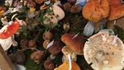 Wissenswertes über Pilze zeigt der Pilzverein Wald-Schönengrund. (Bild: PD)