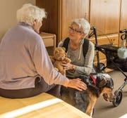 Ruth Tanner (rechts) mit Hund Chinook im evangelischen Pflegeheim Bruggen. «Er ist so ein Lieber», findet die demente Bewohnerin. (Bild: Thomas Hary, 7. November 2018)