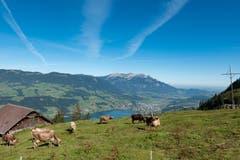 Das schöne liegt so nah, Blick ins Sarneraatal von der Alp Ober-Mus, Sachseln. (Bild: Gregor Jakober, 13. September 2019)