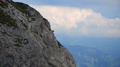 Haben immer die schwindelerregendste Aussicht am Pilatus: Steinböcke. (Bild: ar)
