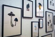 Die Serie «Pilze» von Claudia Hobi (Kaltnadel/Aquatintaradierung) erinnert an kolorierte Studien alter Meister. (Bild: Dieter Langhart)