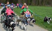 ie Kinder erfreuen sich an der rasanten Hundekutschenfahrt. (Bild: Monika Wick)