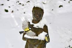 Zwei Kohlmeisen umschwirren eine Statue in einem Wintergarten. (Bild: Klaus Stadler)