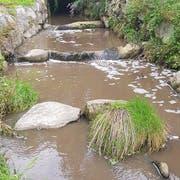 Die Gülle im Würzenbach hat zu Fischsterben geführt. (Bild: Luzerner Polizei)
