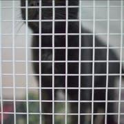 Die Thurgauer Behörden haben am Freitag in Müllheim eine private Tierhaltung wegen hoch prekärer Haltungsverhältnissen geräumt. 21 Katzen lagen tot in einem Gefrierschrank. (Bild: Keystone)