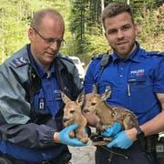 Die Stadtpolizisten mit den beiden erst wenige Stunden zuvor geborenen Rehkitzen. (Bilder: Stadtpolizei St.Gallen - 7. Mai 2019)
