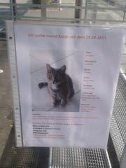 Mit diesem Steckbrief rufen Christian Fritschi und Daniela Kieliger die Bazenheiderinnen und Bazenheider zur Mithilfe bei der Suche nach der vermissten Katze auf. (Bild: Beat Lanzendorfer)