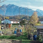 Der bestehende Garten wurde zum Teil bereits geräumt. (Bild: pd)
