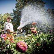Seine Kompetenz ist wichtig, nicht das Steuerdomizil: ein Stadtgärtner giesst die Blumen auf dem Unteren Brühl. (Bild: Ralph Ribi)