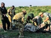 Untersuchung eines Zebras in der Masai Mara: Mathew Mutinda, Dominic Kast, Simon Seiler und weitere Kollegen. (Bild: SRF)