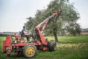 Philipp Hafner bei seiner Arbeit. Für die Anfahrt verrechnet er jeweils 80 Franken, eine Stunde Baumrütteln kostet 196 Franken.