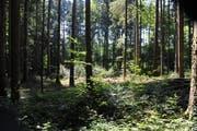 Wälder haben in unserer Kulturlandschaft eine Schutzfunktion. (Bild: Nana do Carmo)