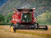 Schweizer Bauern sollen wettbewerbsfähiger werden, damit sie es mit der ausländischen Konkurrenz aufnehmen können. Laut Economiesuisse ist eine Lockerung des Grenzschutzes unausweichlich. (Bild: KEYSTONE/TI-PRESS/PABLO GIANINAZZI)