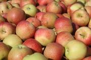 Äpfel der Sorte Gala. (Bild: Susann Basler)