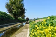 Goldener und trockener Herbst: Der Giessen bei Bürglen führt auch Mitte Oktober noch wenig Wasser. (Bild: Donato Caspari)