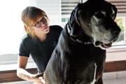 Miriam Schäfli behandelt die Deutsche Dogge Felice auf dem Wohnzimmerteppich. (Bild: Donato Caspari)