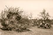 Eine historische Aufnahme der Baumfäll-Aktion. (Bild: PD)
