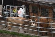 Bei der Tierseuchenübung wird trainiert, was zu tun ist, falls auf einem landwirtschaftlichen Betrieb im Kanton Luzern die hochansteckende Maul- und Klauenseuche ausbricht. Bild: Boris Bürgisser (Ruswil, 19. Oktober 2018)
