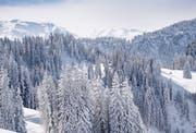 Ganz so weiss wie vergangenen Februar wird sich die Natur am Wochenende noch nicht zeigen. Die Schneefallgrenze sinkt allerdings auf 1000 Meter. (Symbolbild)