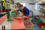 Metzger Walter Willi und Lehrling Silvan Krucker müssen vorsichtig arbeiten, damit die Blutwürste nicht platzen. (Bild: Lara Wüest)