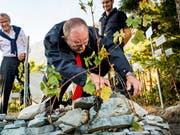 Nationalratspräsident Dominique de Buman (Mitte) gibt alles im Weinberg von Farinet im Wallis, dem kleinsten der Welt. (Bild: KEYSTONE/JEAN-CHRISTOPHE BOTT)