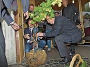 Zur Eröffnung des «Haus des Weines» wurden stilgerecht von Gemeindepräsident Bruno Seelos (l.) und Kantonsrat Bruno Damann Weintrauben geerntet. (Bild: Ulrike Huber)