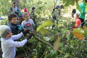 Mit Material, das das Gartenbauamt (neu Stadtgrün) bereitgestellt hat, werden Asthaufen beim Halden-Schulhaus aufgeschichtet.