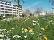 Blumenwiese auf dem Erlenpark Rotkreuz. (Bild: PD)