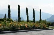 13 Mittelmeerzypressen wurden gepflanzt. Sie stehen für die zwölf Apostel und Maria Magdalena. (Bild: Tushar Desai)
