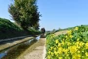 Der Giessen bei Bürglen führte auch Mitte Oktober noch sehr wenig Wasser. (Bild: Donato Caspari)