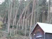 Der Sturm «Vaia» knickte in der Nacht auf den 30. Oktober in Appenzell Innerrhoden ganze Waldflächen wie hier in Gontenbad. (Bild: Oberforstamt Appenzell Innerrhoden)