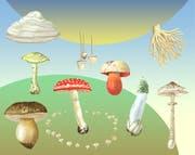 Pilze üben auf die Menschen eine spezielle Anziehungskraft aus.