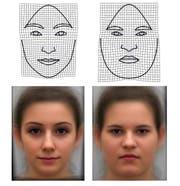 Körperfett verändert die Gesichtsform. (Bild: Universität Wien)