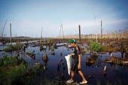 Ein noch intakter Sumpf in Sumatra, Indonesien: Legt man solche Feuchtgebiete trocken, entsteht grosser Schaden. (Bild: Ulet Ifansati/Getty)