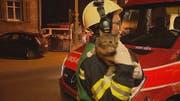 Ein Weinfelder Feuerwehrmann bringt die verängstigte Katze Inka nach der Rettung aus dem Haus in Sicherheit. (Bild: BRK News)