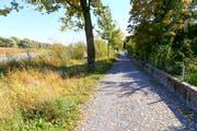 Auf diesem Abschnitt des Uferweges am Alten Rhein ist der Hochwasserschutz bereits fertiggestellt. Auch vorne beim noch fehlenden Stück wäre die Dammkrone kaum höher als hier die Mauer. (Bild: Rudolf Hirtl)