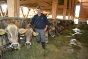 Landwirt Toni Huber aus Oberhelfenschwil versorgt seine Kühe – diese leben in einem Laufstall mit viel Licht und Luft – mit eigenem Heu. (Bild: Adi Lippuner)