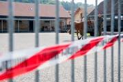 Ein Militärangehöriger führt ein in Hefenhofen beschlagnahmtes Pferd über den Hof des Veterinärzentrums im bernischen Sand-Schönbühl. (Bild: Keystone/Anthony Anex)