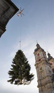 Immer eine Attraktion, die viele Städterinnen und Städter nach oben schauen lässt: Der grosse Christbaum für den Klosterplatz wird seit Jahren per Helikopter eingeflogen. (Bild: Ralph Ribi - 10.11.2015)