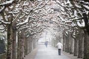 Die verschneite Allee am Carl-Spitteler-Quai. (Bild: Urs Flüeler / Keystone (Luzern, 19. März 2018))