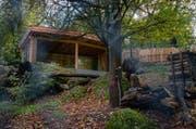 Blick in die neue Fuchsanlage im Natur- und Tierpark Goldau. (Bild: PD)